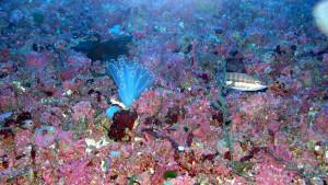 Se quiere preservar el fondo marino de Menorca.