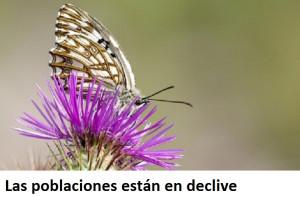 El estudio analiza la presencia de este insecto en la isla.