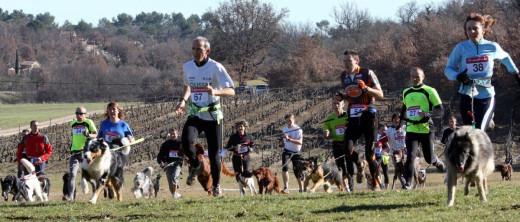 """Imagen de una competición de """"cani cross"""" con pastor alemán."""