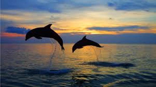 Delfines en s'Algar.