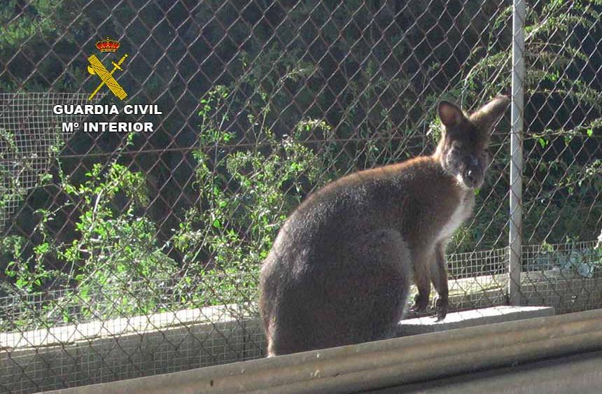 20161230-seprona-inspeccion-nucleo-zoologico3