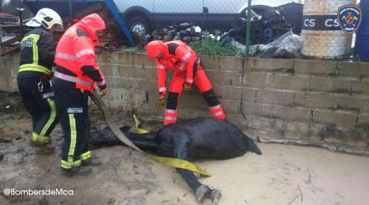 Momento del rescate del caballo (Foto: Bombers de Mallorca)