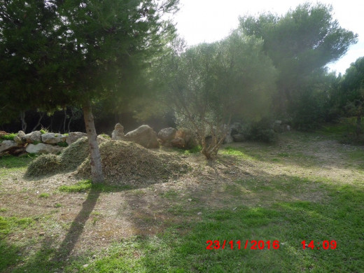 (Galería de fotos) El pinar de Biniancolla deja de ser un vertedero