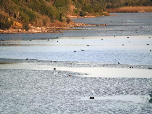 Casi 5.500 aves de 48 especies diferentes censadas en Menorca