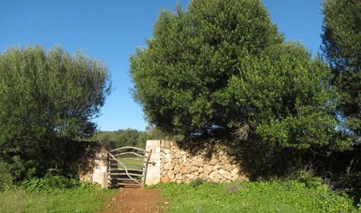 Los pequeños productores agroalimentarios de Menorca reducirían sus gastos