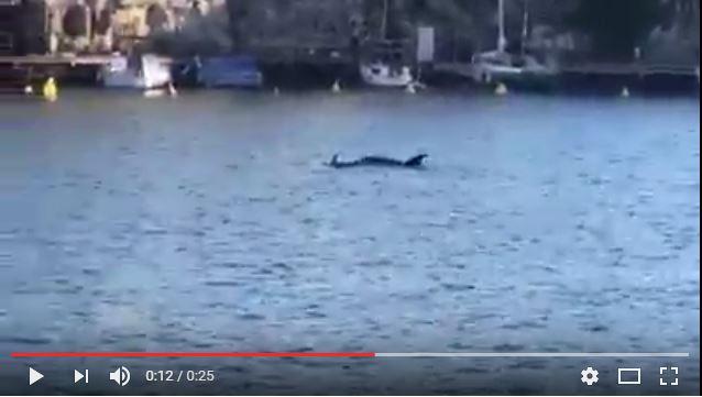 Delfines en Cales Fonts