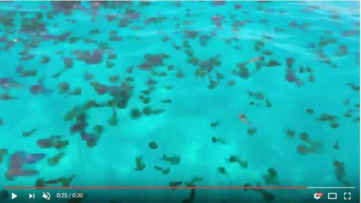 Precaución con la llegada de medusas a Menorca