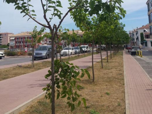 Un grupo de vándalos destrozan los árboles de la calle Fontanillas de Es Castell
