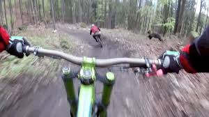 Secuencia de los ciclistas y el oso apareciendo a la derecha.