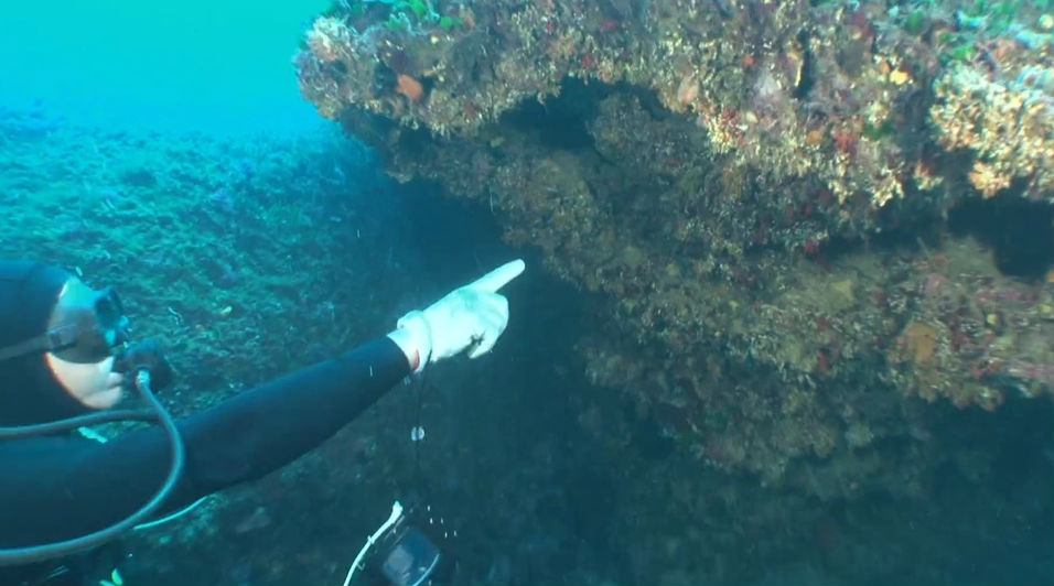 Calleja, en aguas de la Isla