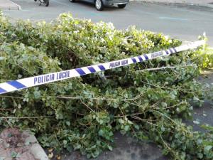 La policía local acordonó el árbol caído para evitar daños.