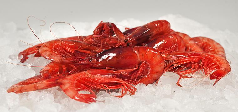 Gamba roja del Mediterráneo.