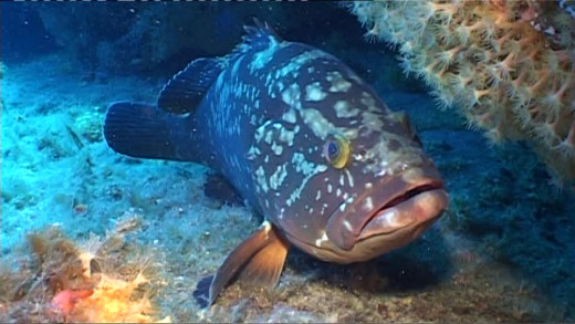 Cabe plantearse si las reservas marinas son un logro o una necesidad