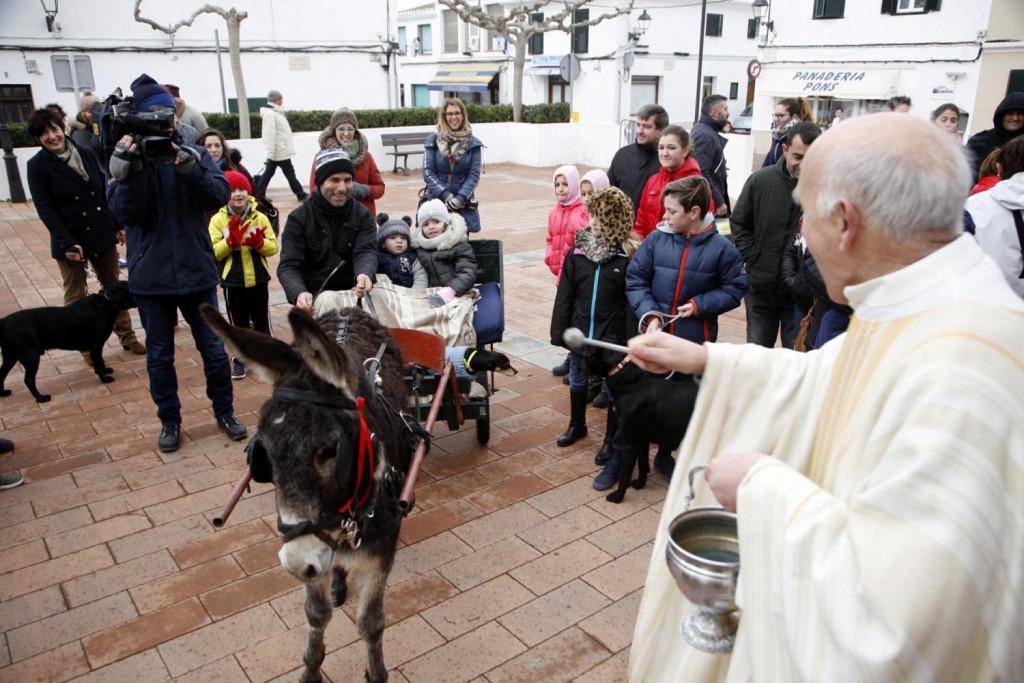 Sant Lluis se prepara para recibir Sant Antoni por todo lo alto.