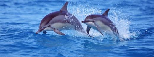 Imagen de dos delfines.