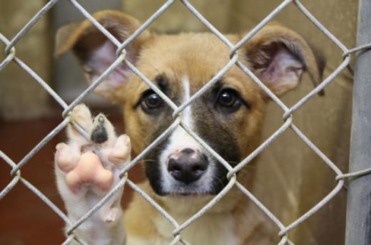 Imagen de un perro en un centro (Foto: Wakyma)