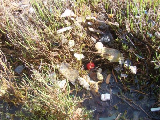 (Fotos) 70 menorquines se enfrentan a la 'epidemia de los plásticos'  en Fornells