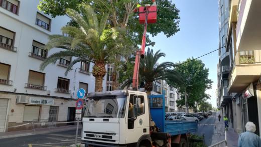 Estos días se desarrollarán los trabajos de poda de la arboleda de la calle Pintor Calbó. Fotos: Tolo Mercadar