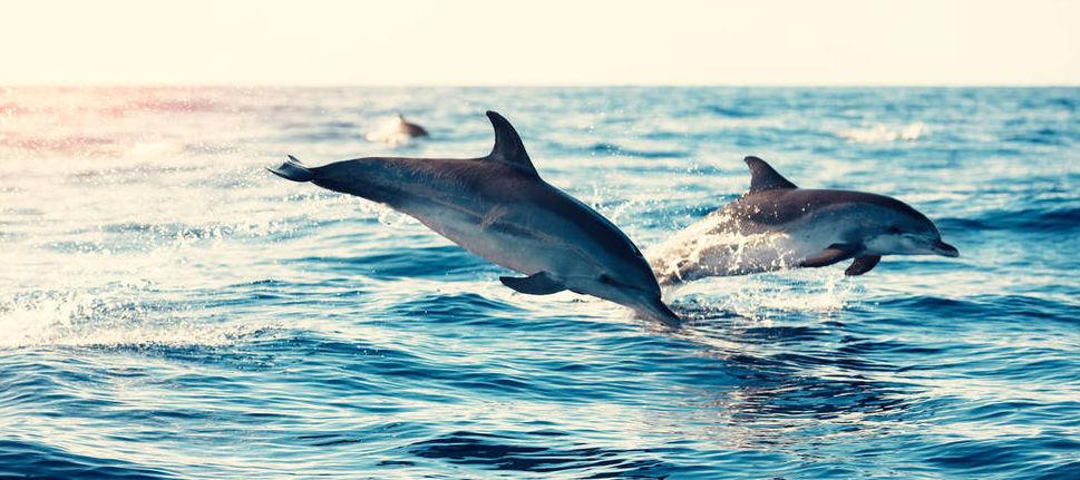 Delfines en una imagen de archivo.
