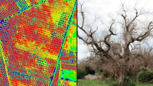 A la izquierda, un mapa creado por drones para detectar la presencia de la bacteria.