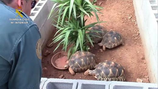 Imagen del recinto en el que vivían algunas de las tortugas.