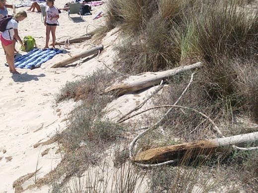 (Fotos) Denuncian la ocupación de la zona dunar de Cala Mitjana, que sigue perdiendo arena