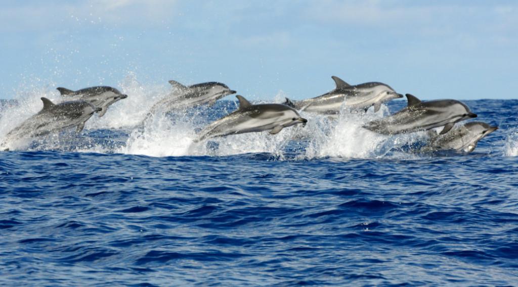 Delfines en el Mediterráneo.