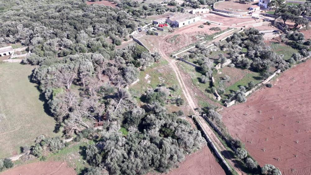 Fotografía aérea de los árboles caídos (Fotos: @xarxaforestal)