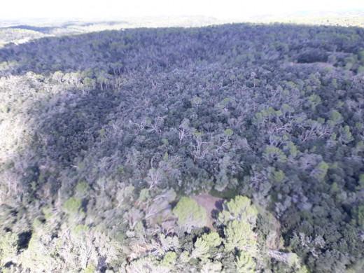 """(Galería de fotos) Los efectos del """"cap de fibló"""", vistos desde el aire"""
