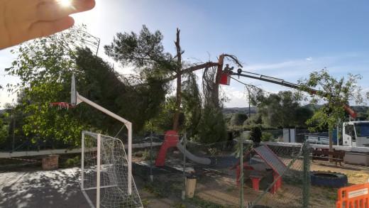 Personal de la brigada del ayuntamiento de Maó retira los restos de árboles que dejó el temporal
