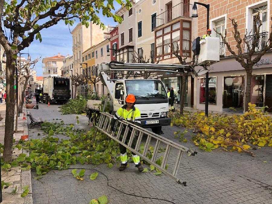 Comienza la poda de árboles en la calle Ses Moreres