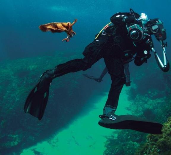 El mar es el tema común de este ciclo de charlas organizado por la Agencia Menorca Reserva de Biosfera