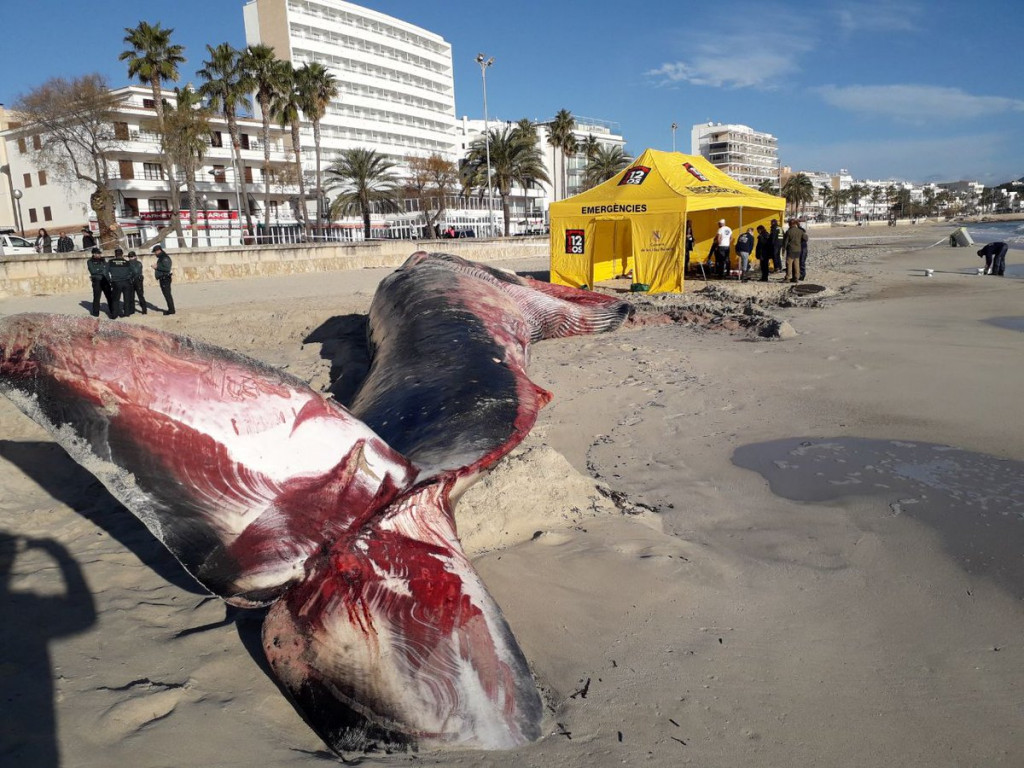 Imagen que envía Emergencias 112 sobre el estado de la ballena varada en Cala Millor (Mallorca)