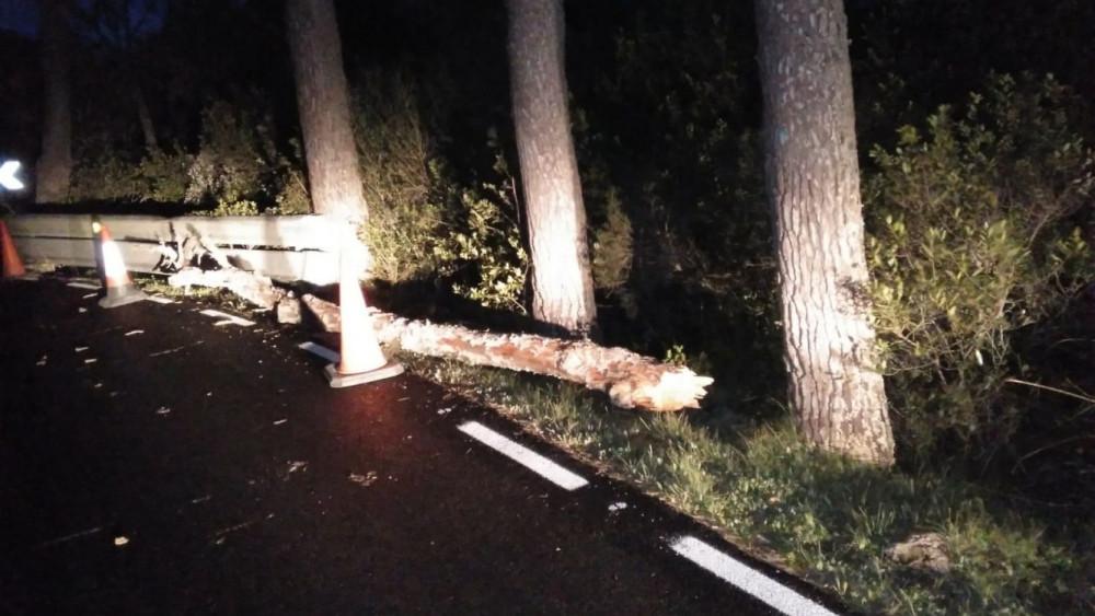 Árboles caídos en la carretera entre Es Mercadal y Es Migjorn.