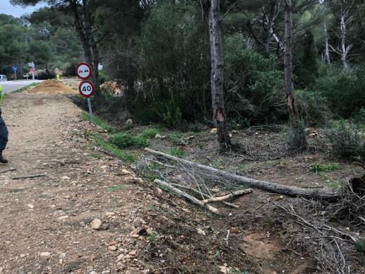 (Vídeos y fotos) Árboles caídos, oleaje, viento… así son los efectos del temporal
