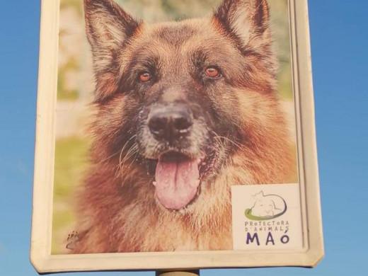 Original campaña de adopción de perros de la Protectora de Animales de Maó