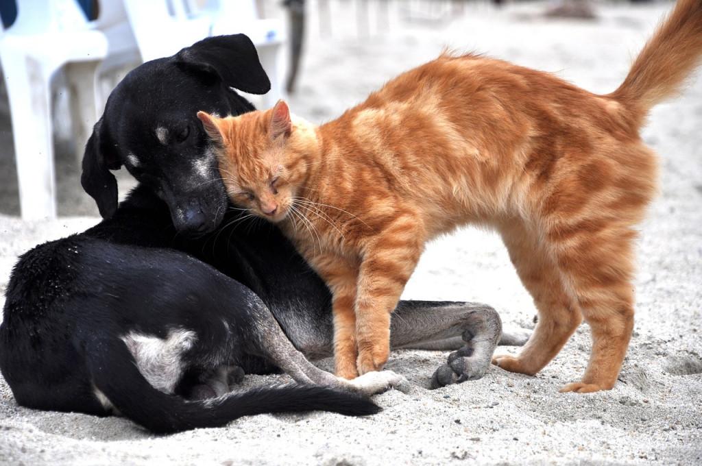 Buscan concienciar sobre el cuidado y la tenencia responsable de mascotas