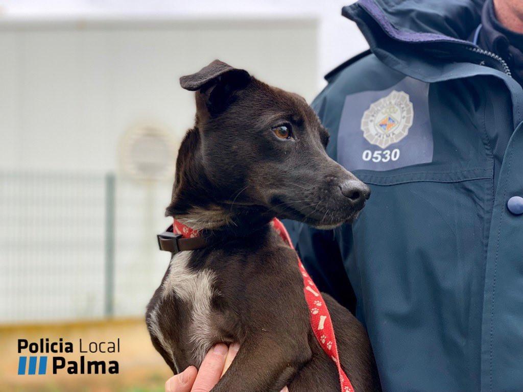 "Imagen de la perrita ""Luna"" (Foto: Policía Local de Palma)"