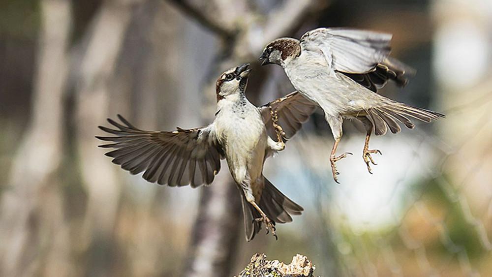 Dos pájaros sobre una rama (Foto: Mikel Llambías)
