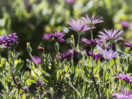 (Galería de fotos) Las postales que deja la llegada de la primavera a Menorca