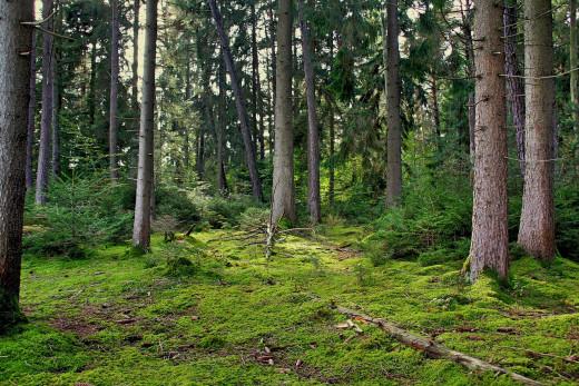 El bosque de Menorca no está limpio