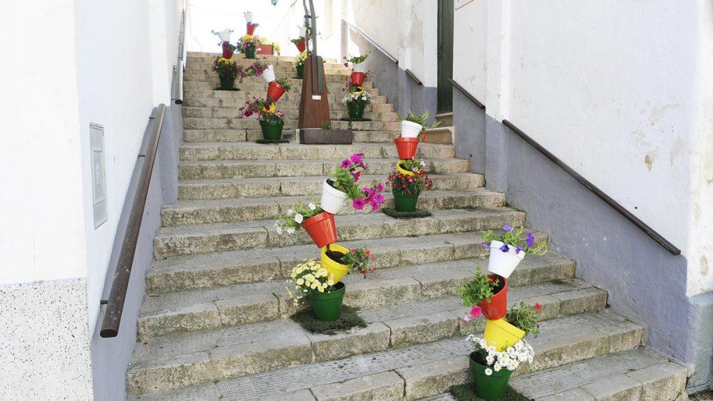Flores por la calle.