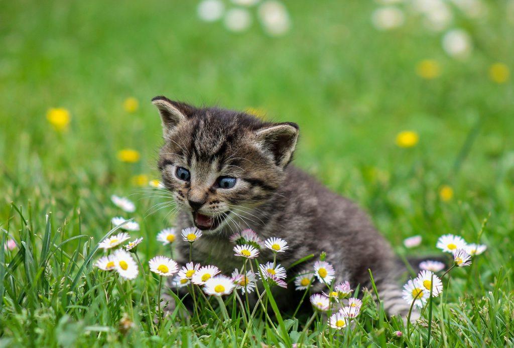 Según los comentarios en varias zonas de Menorca los gatos están en peligro (Fotografía: Ilona Ilyés)