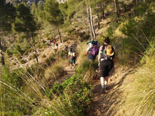 """(Galería de fotos) """"Trucaires"""" de Ferreries, en La Trapa de Mallorca"""