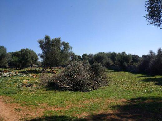 Imagen de los trabajos realizados en los caminos rurales de Es Castell (Foto: Associació de veïns des Castell)