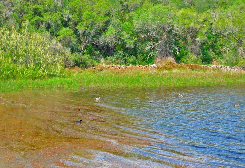 La Albufera des Grau es un lugar ideal para ver las aves en su hábitat