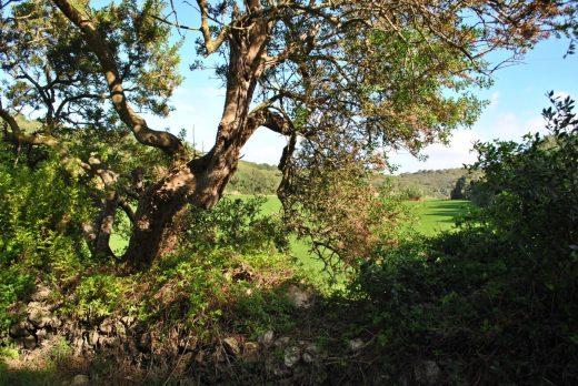 El campo de Menorca resulta muy atractivo para los turistas