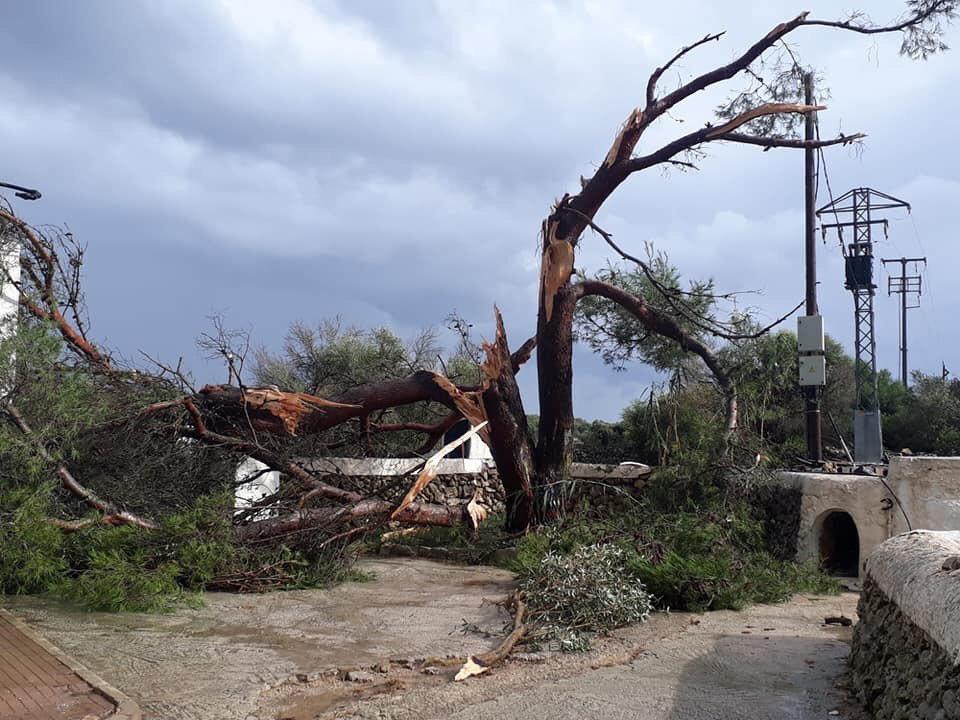 El cap de fibó arrasó 19 fincas agrícolas causando numerosos destrozos