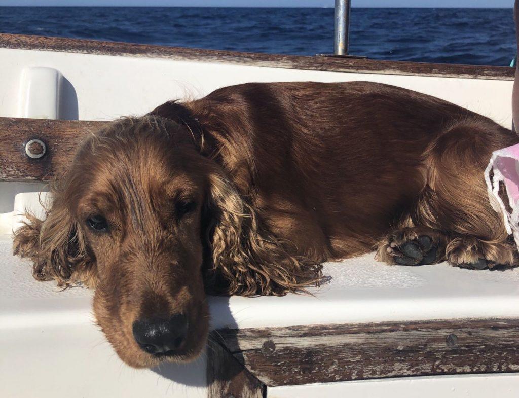 Imagen de la perra en la barca (Fotos: Laura Coloma)