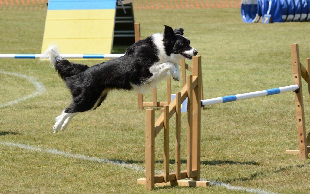 Esta práctica es muy recomendada para mantener en forma a los perros